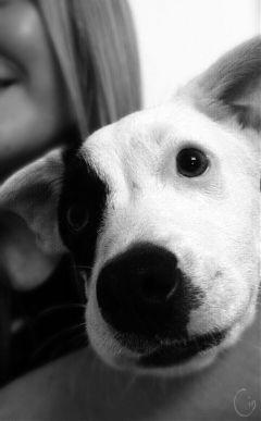 black & white love pets & animals cute