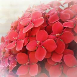 nature flower photography bokeh