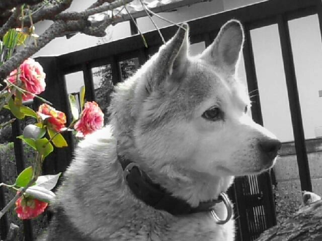 photography emotions color splash pets & animals dogs