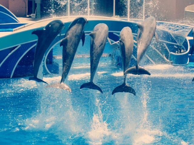 pictures of dolphins