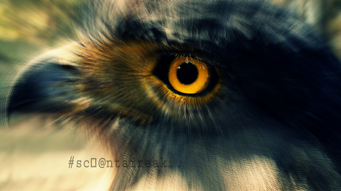 ..EAGLE EYE..     (edit II)