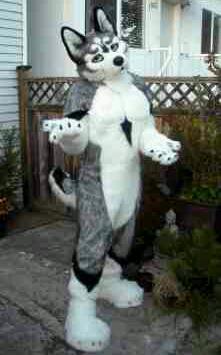 Ioco Siberian Husky Fursuit One Fur All Studios Furaf