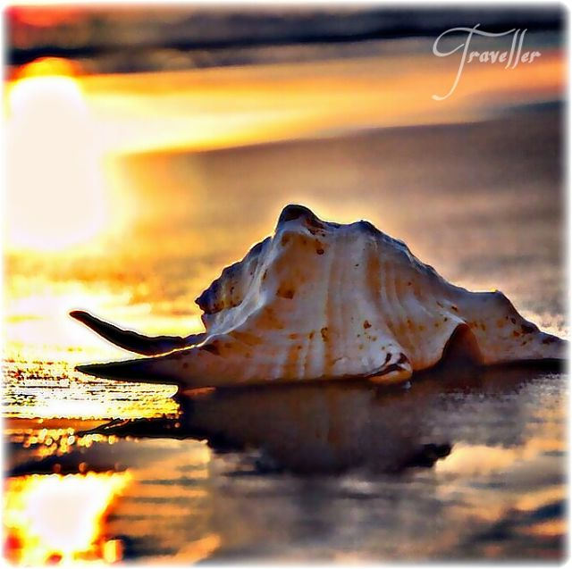 seashell photos