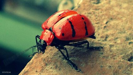 photography colorful pets & animals macro