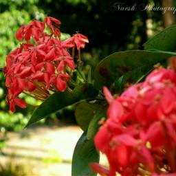 photography nature flower newyear2013 wapbokeh wapblur