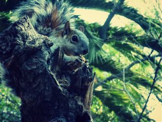 squirrel photography pets & animals nature chapultepec