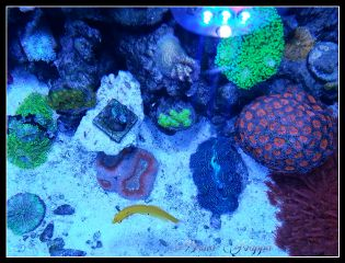 nature pets & animals photography colorful coral fish