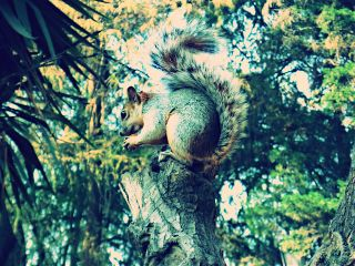 photography pets & animals nature chapultepec squirrel tree