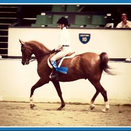 pets & animals horse animals win compete color splash