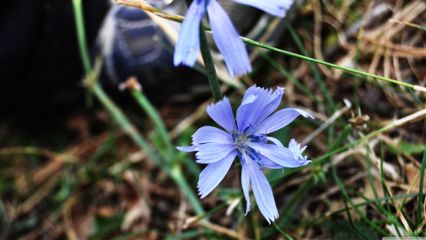 photography nature spring flower