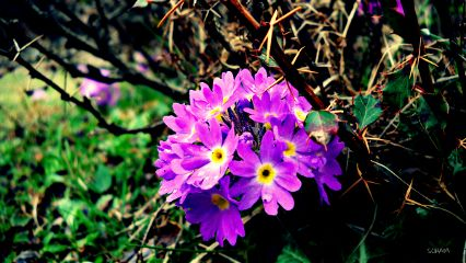 photography nature colorful macro travel flower