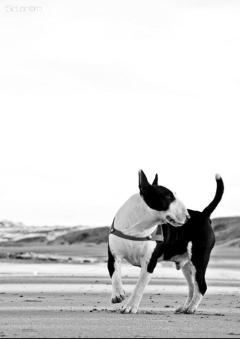 black & white dog pets & animals