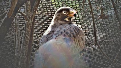 canon photography nature wildlife bird