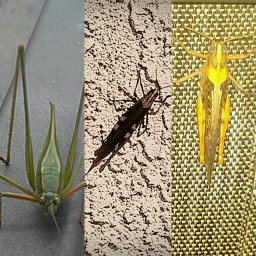 grasshoppers collage