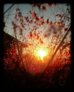photography sunset nature sun